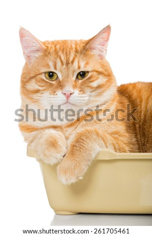Beautiful red cat lies in a plastic box, isolated on white - stock photo