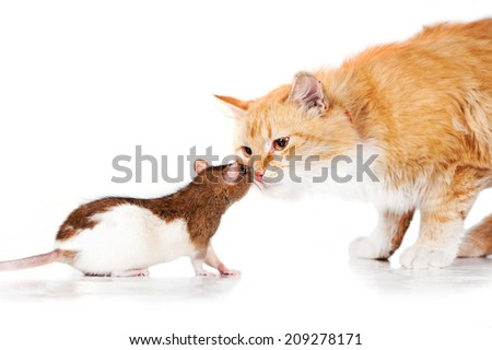 Beautiful red cat with a rat - stock photo