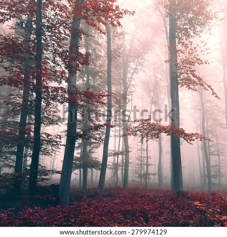 Beautiful red colored foggy dreamy forest landscape with mystic light. Red color filter effect used. - stock photo