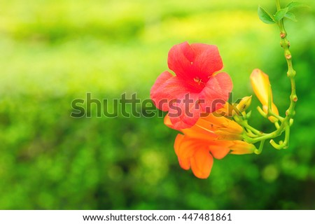 Beautiful red flower bloom on green natural background - stock photo