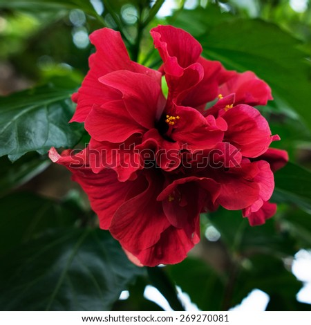 beautiful red flower, close up - stock photo