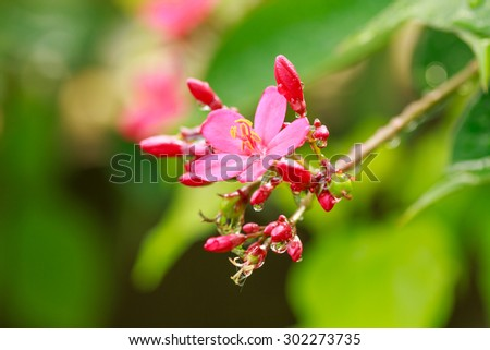 Beautiful red flower with green leaf on blurred background after rain
