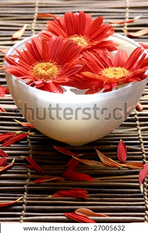 Beautiful red flower with petals in a bowl - stock photo