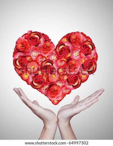 Beautiful red flowers - stock photo