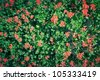 Beautiful red flowers on green background. Close-up - stock photo