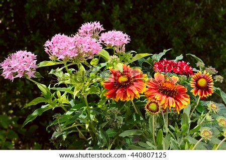 beautiful red gerbera flower in the outdoor garden - stock photo