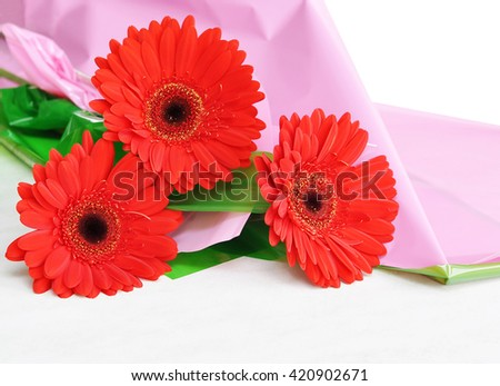 Beautiful red gerbera flower on a colored background. Macro with shallow dof.