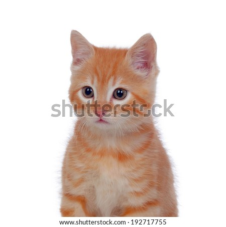Beautiful red-haired kitten isolated on white background