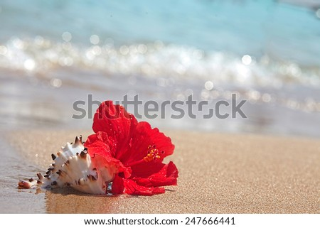 Beautiful red hibiscus flower on the beach - stock photo