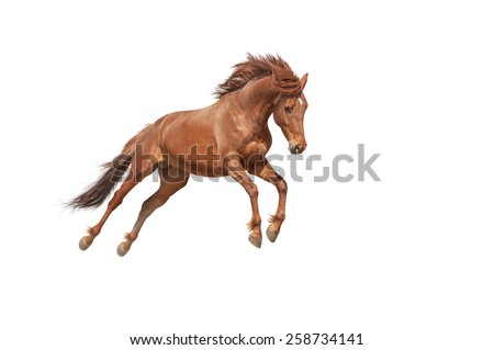 Beautiful red horse galloping in a phase jump developing mane. Thoroughbred stallion isolated on white background - stock photo