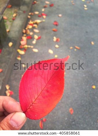 Beautiful red leaf on hand , pathway of Japanese autumn and winter, Kyoto , Japan , October to December - stock photo