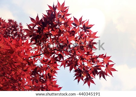 Beautiful red leafs with forest background - stock photo