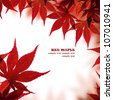 Beautiful red maple border over white - stock photo