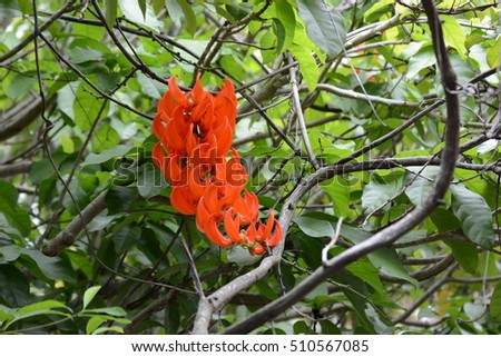 beautiful red orange group flowers, Parichat flower