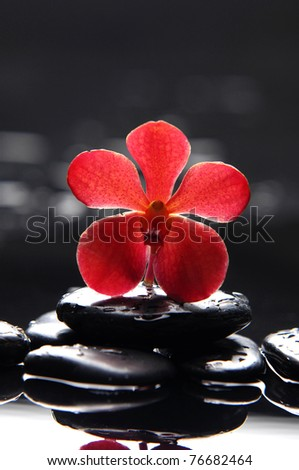 Beautiful red orchid and therapy stones reflection - stock photo