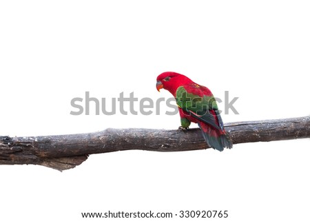 Beautiful red parrot with green wings isolate on white background - stock photo