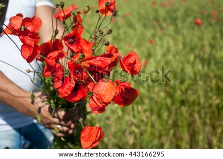Beautiful red poppy flowers in men hands isolated on poppy field. Close up of young man giving bouquet of flowers.