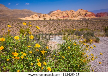 Beautiful Red Rock Canyon desert landscape with wildflowers - stock photo
