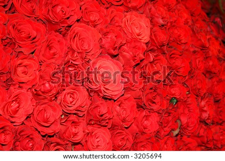 Beautiful red rose flowers background