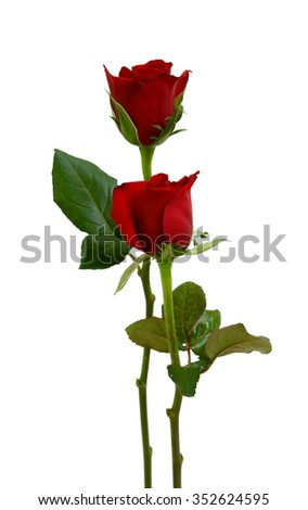 beautiful red rose flowers isolated on white background - stock photo