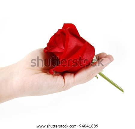 beautiful red rose on hand