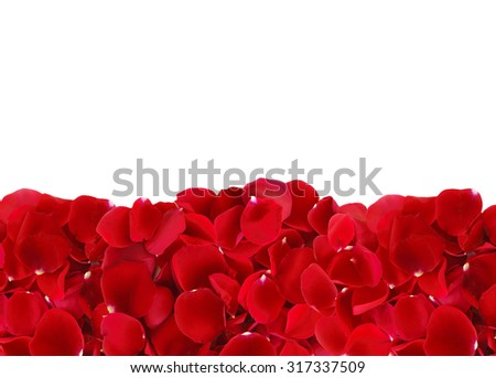 beautiful red rose petals isolated on white background - stock photo
