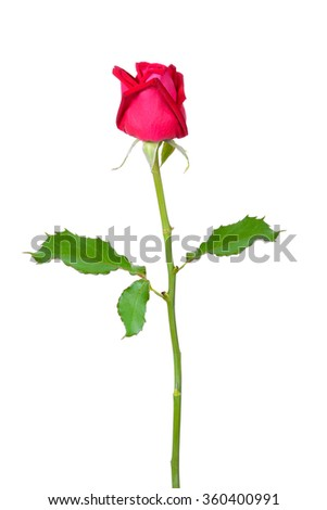 Beautiful red rose with  isolated on white background