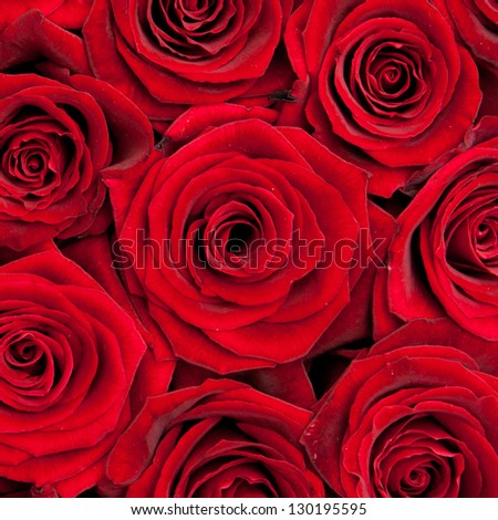 beautiful red roses - stock photo
