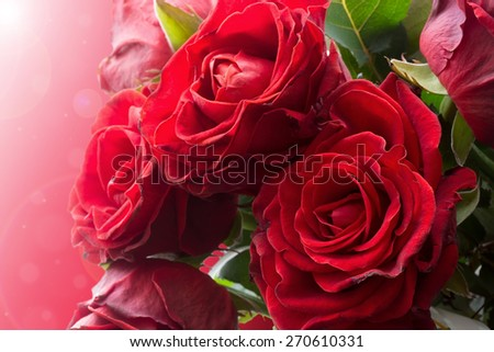 beautiful red roses on a pink background