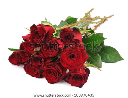 beautiful red roses on a pure white background