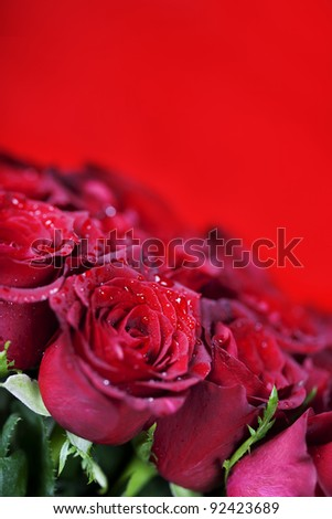 beautiful red roses on red background - stock photo