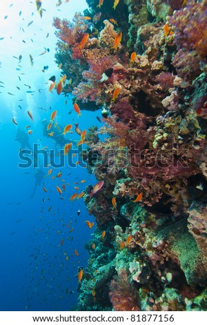 Beautiful red soft coral on a piece of ship wreckage - stock photo