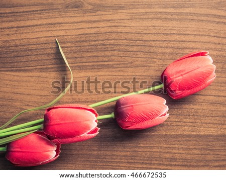 beautiful red tulip on wooden background with space for text