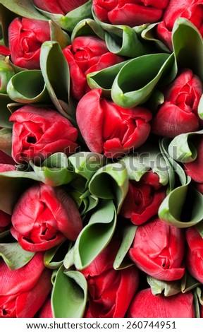 beautiful red tulips, big bouquet - stock photo