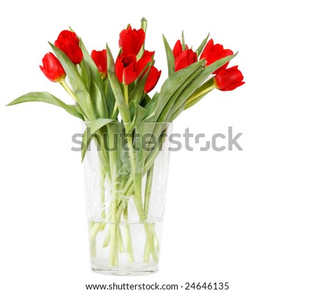 beautiful red tulips in crystal vase - stock photo