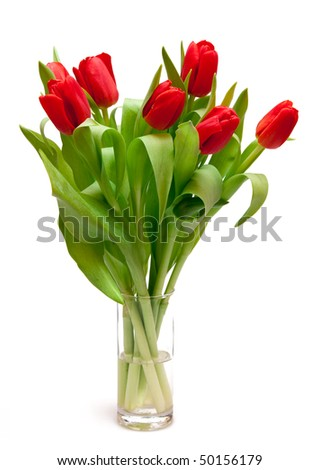 beautiful red tulips in vase - stock photo