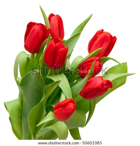 beautiful red tulips in vase