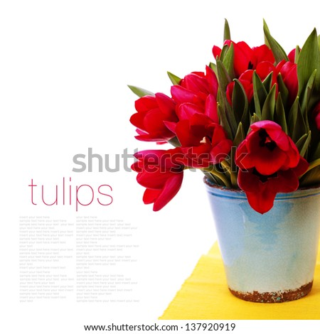beautiful red tulips  isolated on white background (with easy removable text) - stock photo