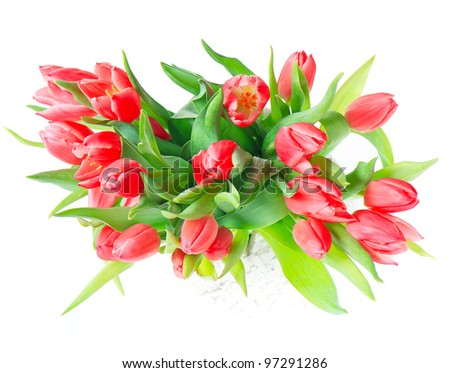beautiful red tulips on white background. spring flowers bouquet