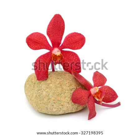 beautiful red Vanda orchids flowers, isolated on white background - stock photo