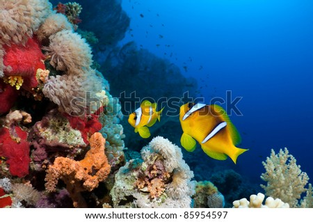 Beautiful reef with copy space for text. - stock photo