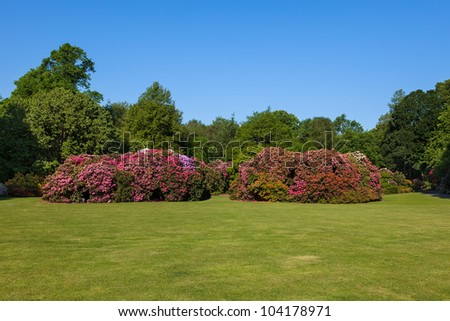 Beautiful Rhododendron Flower Bushes and Trees in a Sunny Garden Landscape - stock photo