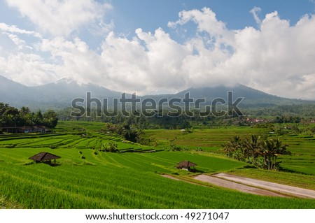 beautiful rice field terrace - stock photo