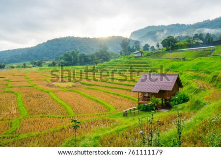 Beautiful rice fields in the countryside of Thailand , Chaingmai