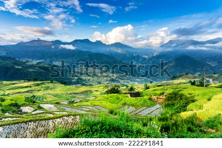 Beautiful rice terraced fields at harvest time in early morning.  Location: Y Ty, Lao Cai province, Vietnam. - stock photo