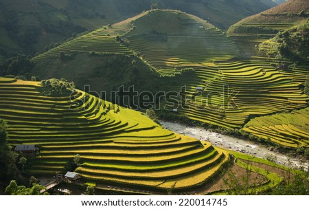 Beautiful Rice Terraces, South East Asia - stock photo
