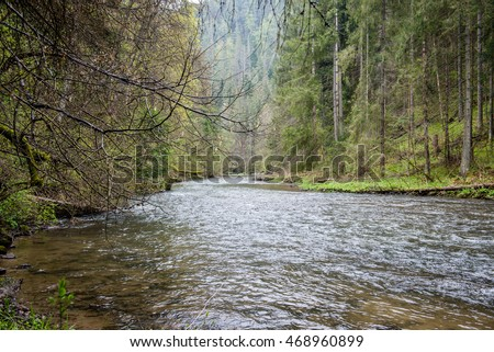 beautiful river in forest with reflections and trees on both sides of the stream