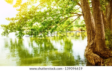 Beautiful river landscape, reflection of big tree in calm water, forest nature, bright yellow sunlight, peaceful scene of spring season lake, selective focus - stock photo