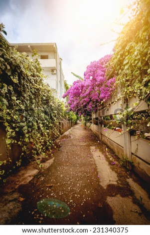 Beautiful road at old city grown with flowers of Bougainvillea - stock photo