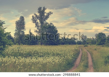 Beautiful road on sunny meadow - stock photo